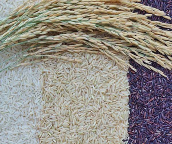 Thai Rice Flagship Store Proves a Success